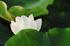 藤原宮跡,蓮(SDQ_1244FL,83 mm,F4.5,1-500 秒)2016yaotomi_.jpg