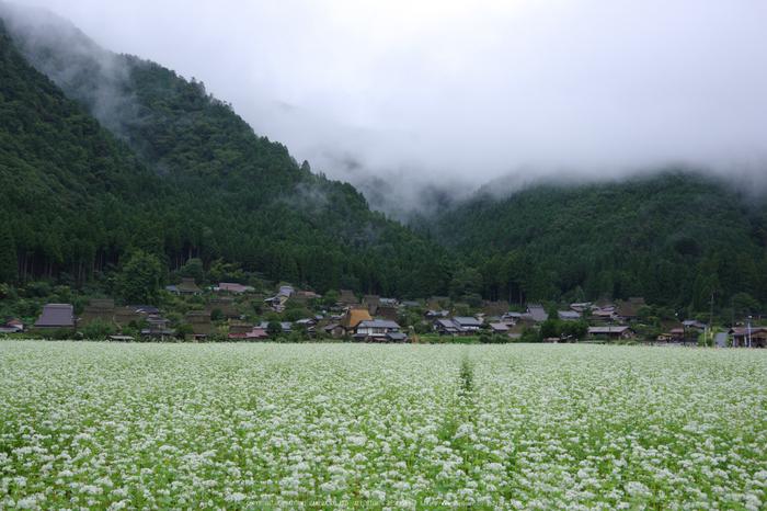 京都美山,かやぶきの里,蕎麦畑(K70_1526,24 mm,F8)2016yaotomi.jpg