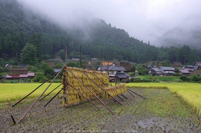京都美山,かやぶきの里,蕎麦畑(K70_1609,21 mm,F8)2016yaotomi.jpg