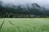京都美山,かやぶきの里,蕎麦畑(K70_1690FL,28 mm,F8)2016yaotomi.jpg