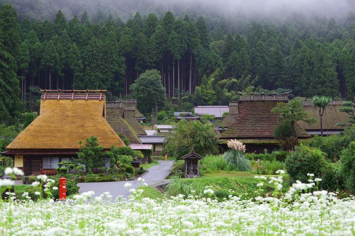 京都美山,かやぶきの里,蕎麦畑(K70_1693,48 mm,F8)2016yaotomi.jpg