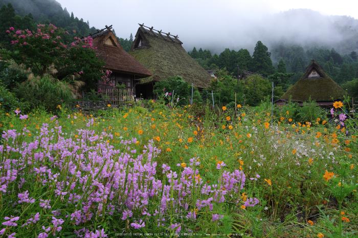 京都美山,かやぶきの里,蕎麦畑(K70_1726,18 mm,F10)2016yaotomi.jpg