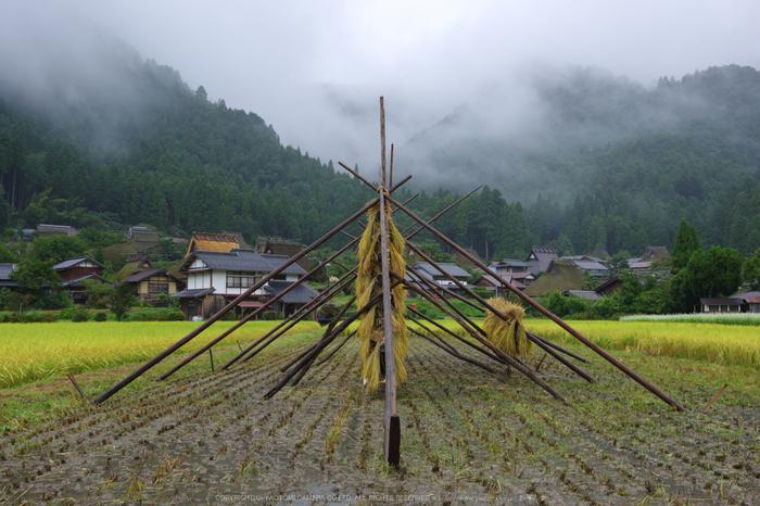京都美山,蕎麦_K70_1613,24 mm,F8_2016yaotomi.jpg