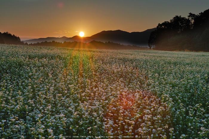 桜井,笠の蕎麦畑(SDQ_2725G,35 mm,F8)2016yaotomi.jpg