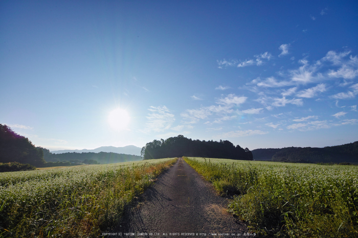 桜井,笠の蕎麦畑(SDQ_2893,8 mm,F9)2016yaotomi.jpg