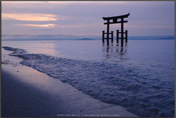 高島,白鬚神社(PK1_0308,36-mm,F8,iso100)2016yaotomi_T.jpg