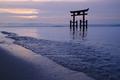 高島,白鬚神社(PK1_0308FL,36 mm,F8,iso100)2016yaotomi.jpg