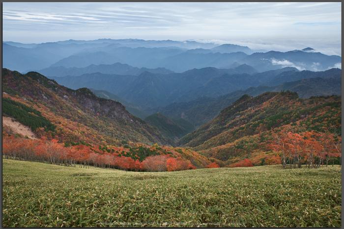 川上村,紅葉(PK1_2408,24-mm,F9)2016yaotomi_T.jpg