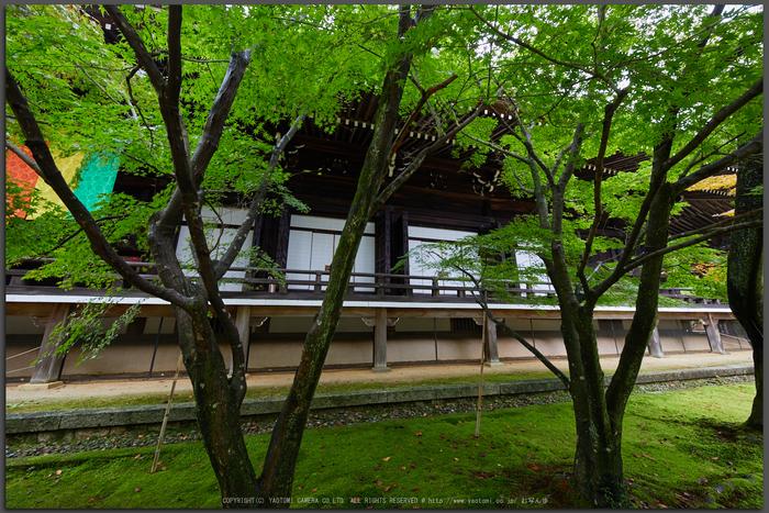 粟生光明寺,紅葉前(2K0A5014,12-mm,F6.3,iso500)2016yaotomi_T.jpg