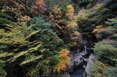 奈良天川,みたらい紅葉(SDQ_3165,8 mm,F9)2016yaotomi.jpg