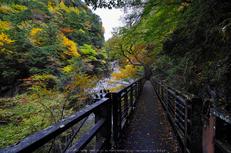 奈良天川,みたらい紅葉(SDQ_3167b,8 mm,F9)2016yaotomi.jpg