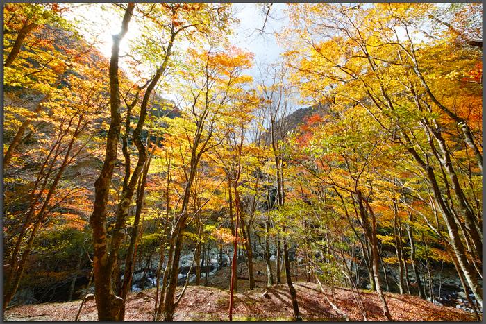 奈良天川,みたらい紅葉(SDQ_3359c,8-mm,F10)2016yaotomi_T.jpg