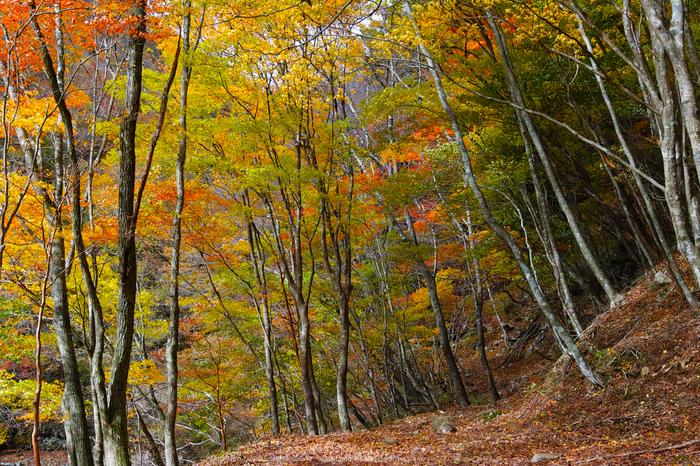 奈良天川,みたらい紅葉(SDQ_3370b,29 mm,F8)2016yaotomi.jpg