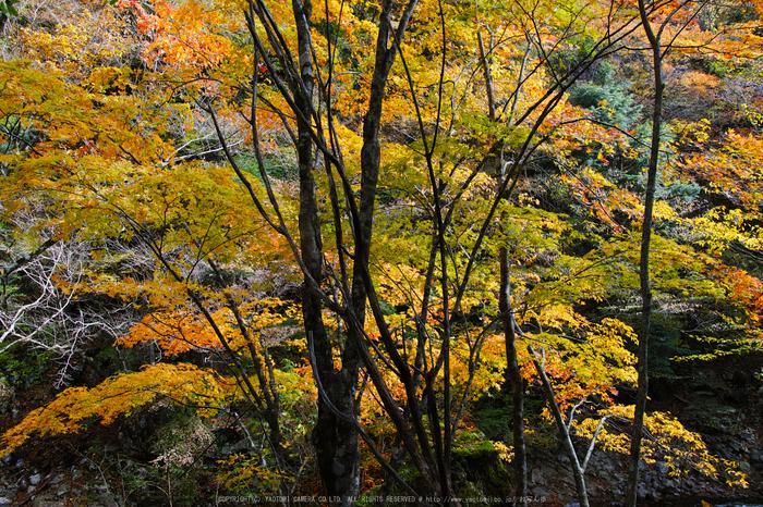 奈良天川,みたらい紅葉(SDQ_3407b,18 mm,F5.6)2016yaotomi.jpg