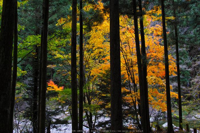 奈良天川,みたらい紅葉(SDQ_3423b,18 mm,F4.5)2016yaotomi.jpg