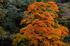 奈良天川,みたらい紅葉(SDQ_3440bFL,72 mm,F2.2)2016yaotomi.jpg