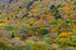 奈良天川,みたらい紅葉(SDQ_3445cFL,50 mm,F5)2016yaotomi.jpg