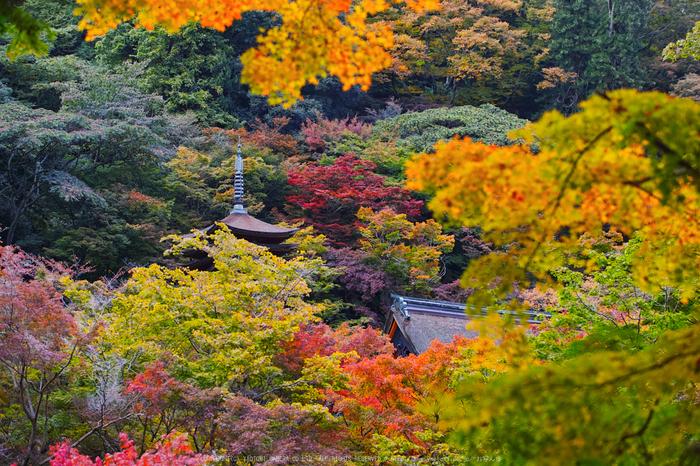 奈良天川,みたらい紅葉(SDQ_3509b,66 mm,F2.5)2016yaotomi.jpg