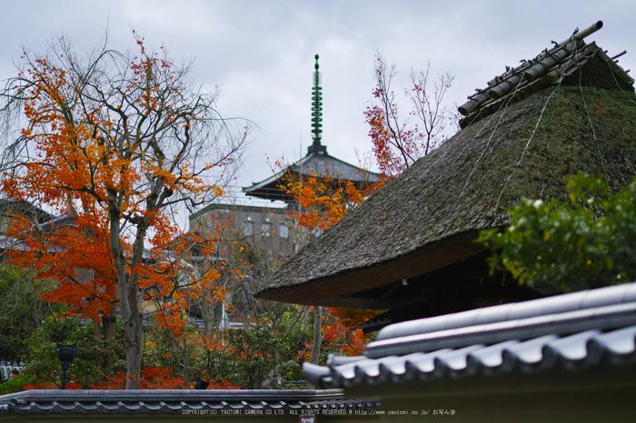 京都ぶらり歩き_SDQH0039,2016yaotomi.jpg