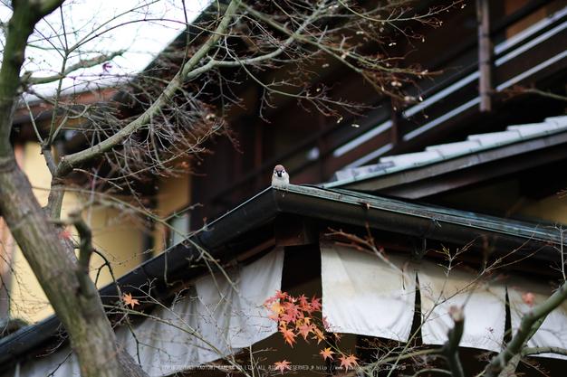 京都ぶらり歩き_SDQH0046,2016yaotomi.jpg