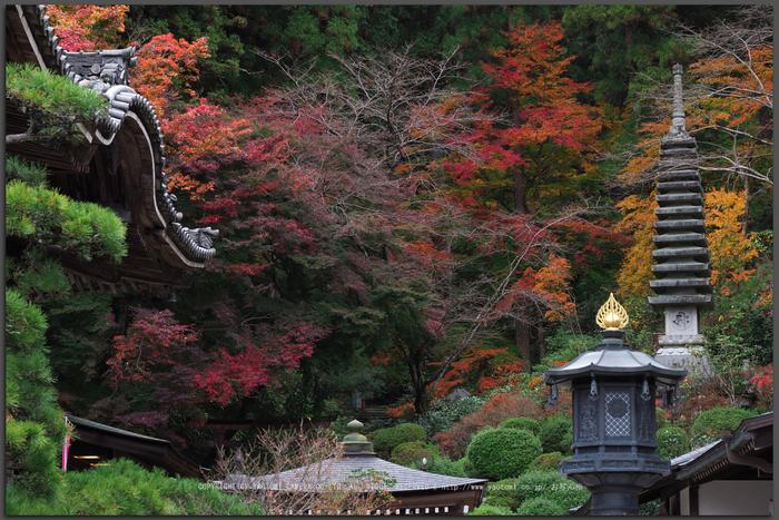 岡寺(PB230015,47-mm,F6.3,iso200)2016yaotomi_T.jpg