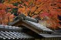 摩氣神社,紅葉_IMG_8734,2016yaotomi_ (2).jpg