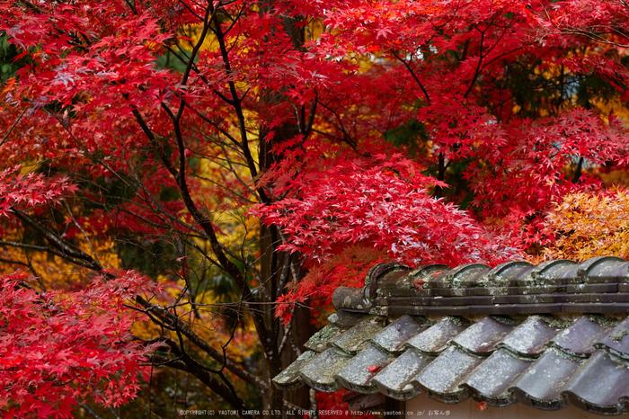 玉雲寺,紅葉_IMG_8832,2016yaotomi_ (2).jpg
