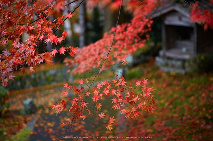 玉雲寺,紅葉_IMG_8838,2016yaotomi_.jpg