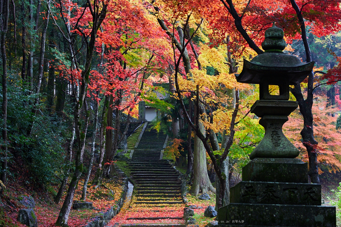 積善寺,紅葉_IMG_9070,2016yaotomi_.jpg