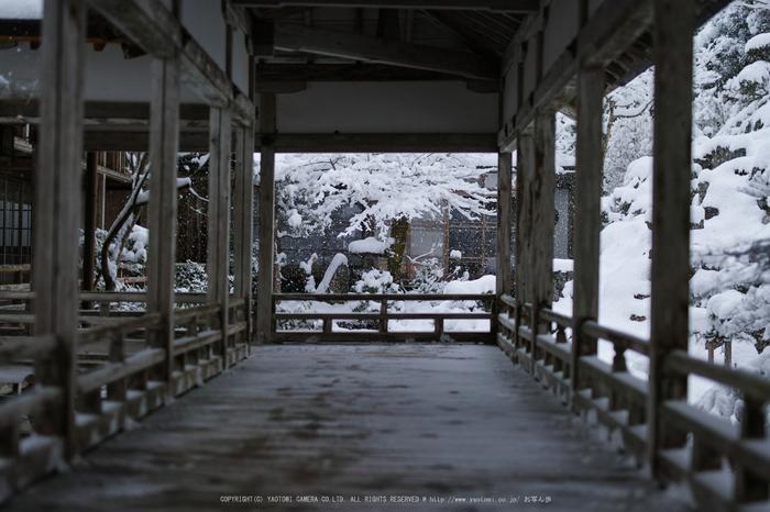SDQH0662,jyousyoukouji,2017yaotomi.jpg