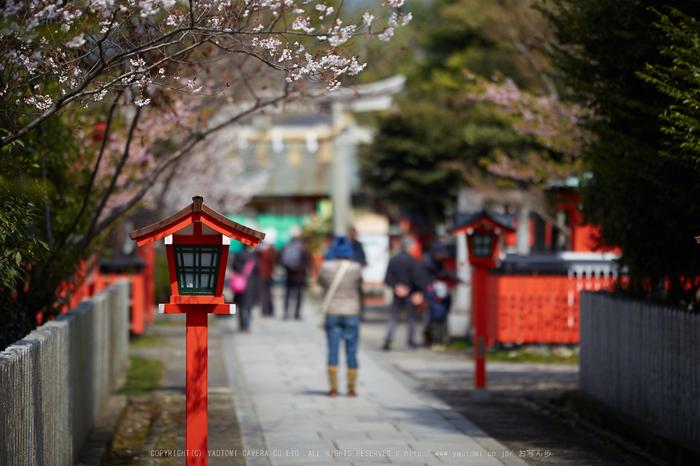 車折神社の桜_IMG_6561,2017yaotomi.jpg
