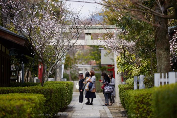 車折神社の桜_IMG_6936,2017yaotomi.jpg