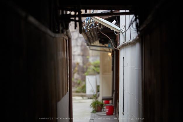 長徳寺おかめ桜_IMG_7025,2017yaotomi.jpg