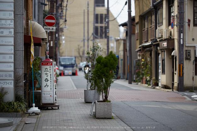 長徳寺おかめ桜_IMG_7030,2017yaotomi.jpg