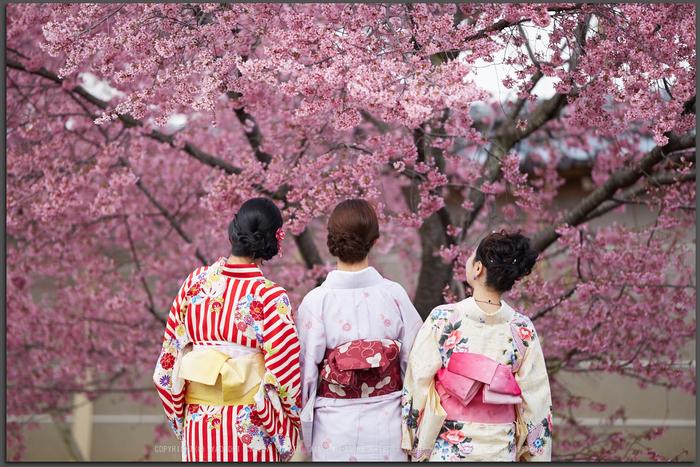 長徳寺おかめ桜_IMG_7040,2017yaotomi_T.jpg