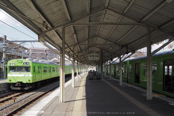 P3080046,2017yaotomi.jpg