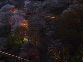 吉野山,桜,CF014948,2017yaotomi 3.jpg