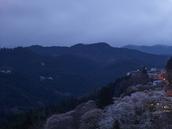 吉野山,桜,CF014948,2017yaotomi.jpg
