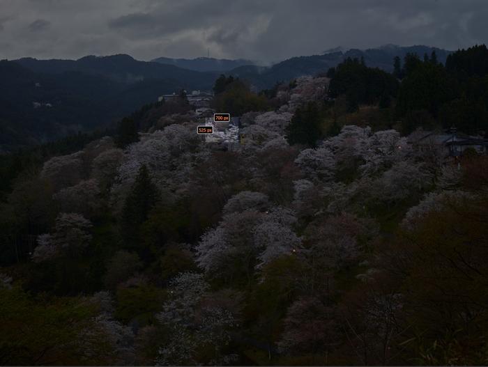吉野山,桜_CF014968,2017yaotomi_s.jpg