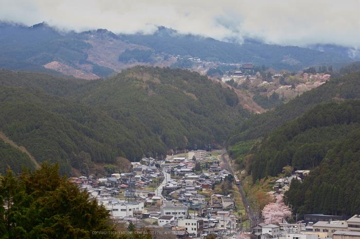 吉野山,桜_IMG_8525,2017yaotomi.jpg