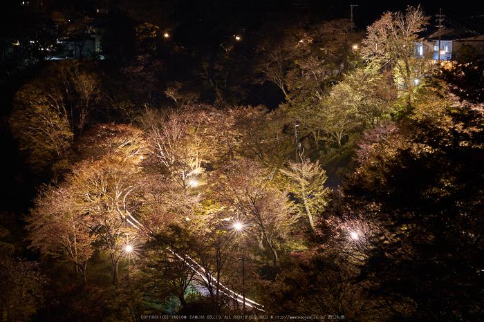 吉野山,桜_IMG_8687,2017yaotomi.jpg