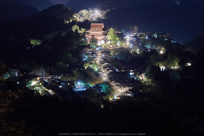 吉野山,桜_IMG_8692,2017yaotomi.jpg