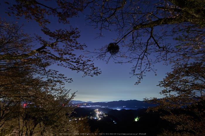 吉野山,桜_IMG_8706,2017yaotomi.jpg