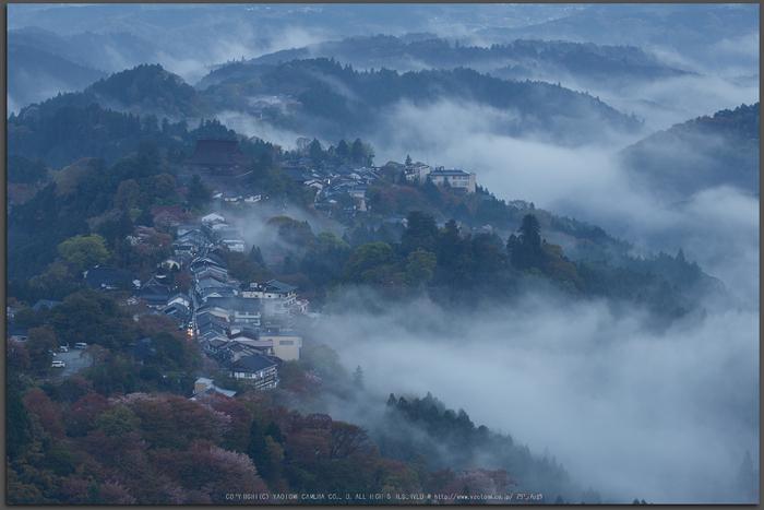 吉野山,桜_IMG_8760,2017yaotomi_T.jpg