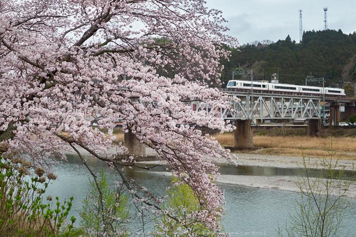 近鉄吉野線,桜_P4080171,2017yaotomi.jpg