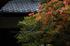 隨心院,雨の石楠花_P4260292,2017yaotomi 1.jpg