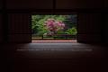 隨心院,雨の石楠花_P4260308,2017yaotomi 1.jpg