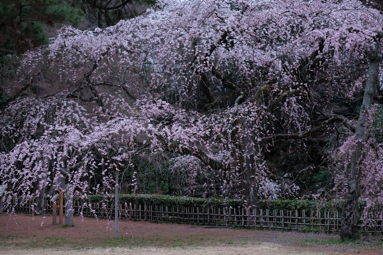 https://www.yaotomi.co.jp/blog/walk/DSCF0359%28PROVIA%29_56%20mm_F2_2018yaotomi.jpg
