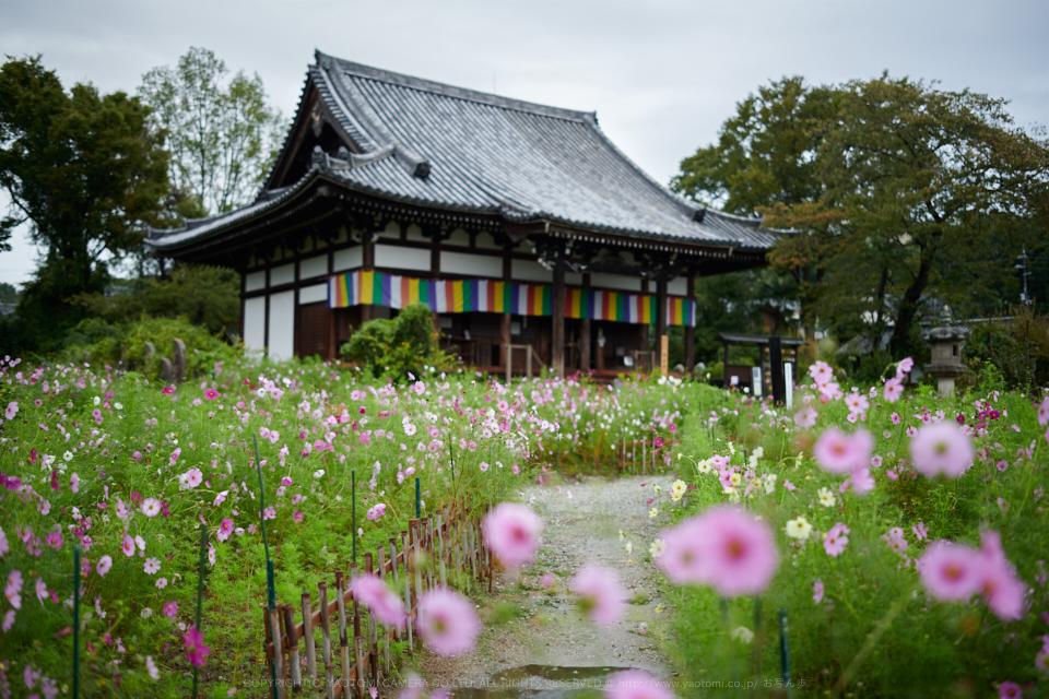 https://www.yaotomi.co.jp/blog/walk/DSC_3264%2C2017yaotomi.jpg