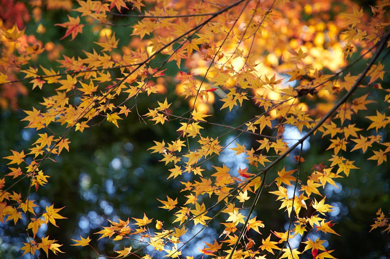 https://www.yaotomi.co.jp/blog/walk/IMG_1627%2C70%20mm2.8_yaotomi.jpg